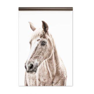 hevonen tapetti groovy magnets